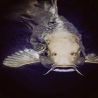 К чему снится рыба: толкование сновидения для женщин и мужчин