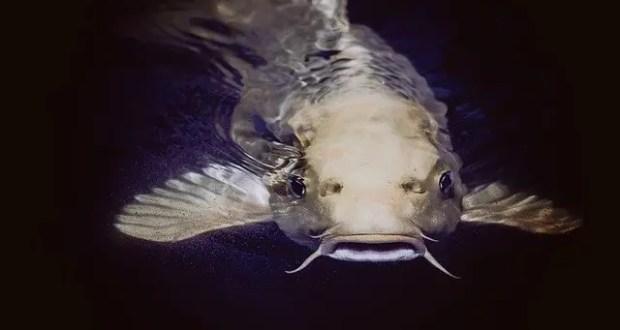 К чему снится рыба