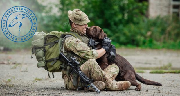 Собачья служба - где работают четвероногие защитники