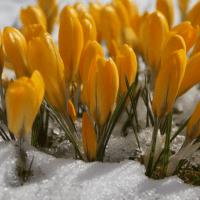28 февраля — Онисим-Зимобор. Зима на весну злится