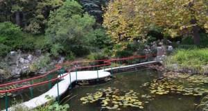 Дословно: минприроды Крыма о посещении Парка-памятника садово-паркового искусства «Форосский»