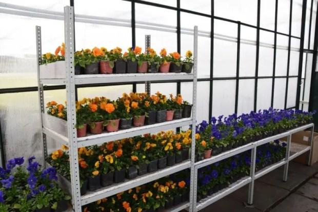 Уже на следующей неделе в Симферополе начнут высаживать цветы
