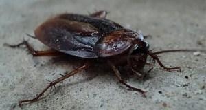 Живые, усатые, большие и рыжие... К чему снятся тараканы