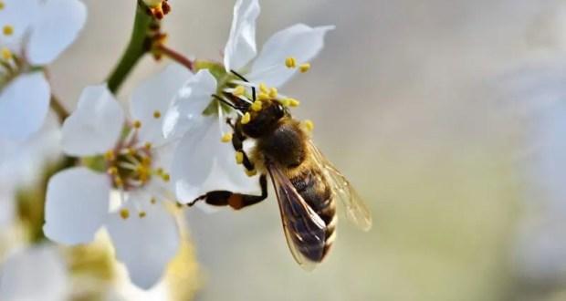 28 апреля — Пудов день. Пчёлы жалят только грешников