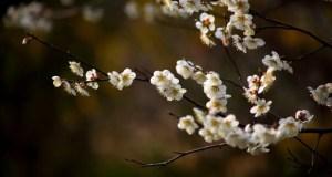 19 апреля — Евтихий Тихий и Ерема Пролетный