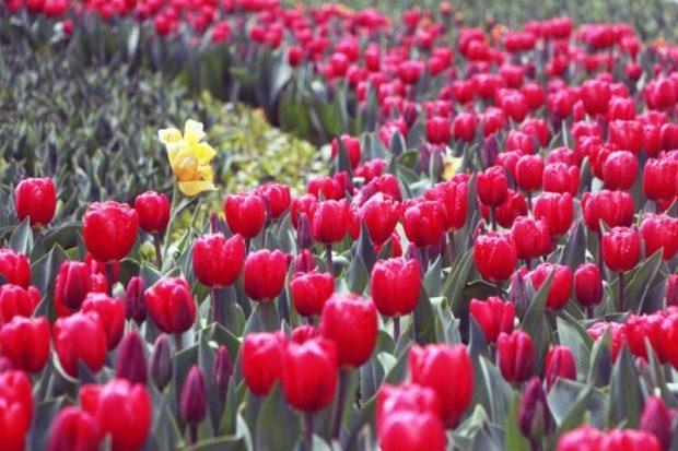 мбах Севастополя высадили более 300 тысяч цветов