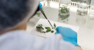Учёные КФУ применяют микропрививки для производства саженцев винограда