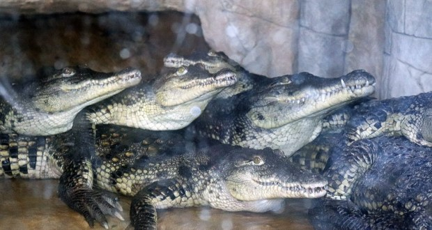 С ялтинским Крокодиляриумом будет все хорошо, а вот на «Поляне сказок» смыло подпорную стену