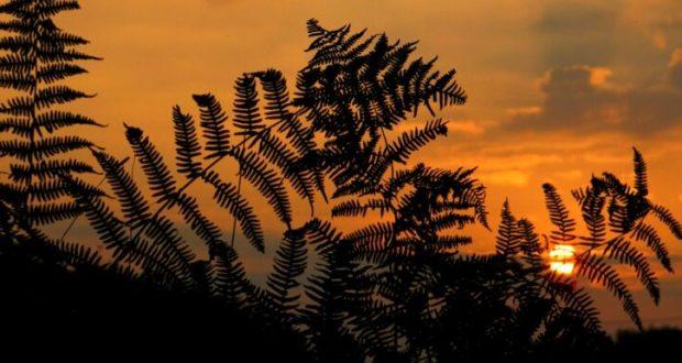 травы и растения, собранные нынче, обладают особой силой