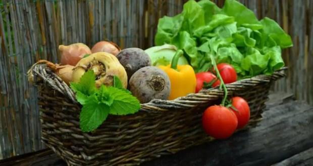 С начала года в Крыму собрано порядка 13 тысяч тонн овощей