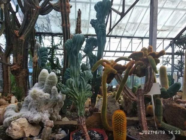 Кактусовая оранжерея Никитского ботанического сада празднует 25-летие