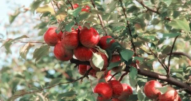19 августа – яблочный Спас. Преображение Господне