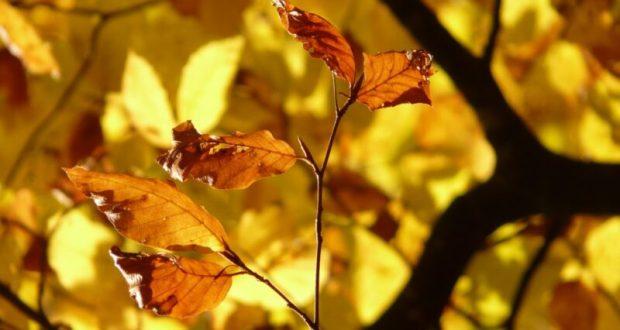 Ялта - среди популярных направлений для отдыха в октябре