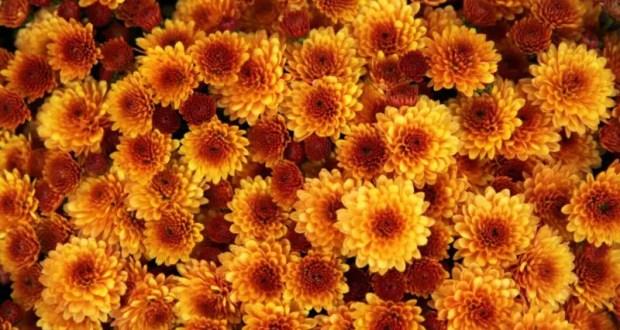 Осень в Крым пришла в соответствии с календарём