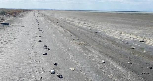 Массовая гибель птиц на севере Крыма. В причинах разбираются ветеринары и ученые