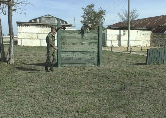 Кинологи армейского корпуса Черноморского флота начали подготовку к конкурсу «Верный друг»