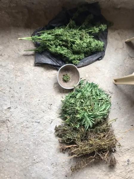 В Сакском районе Крыма селянин устроил плантацию конопли