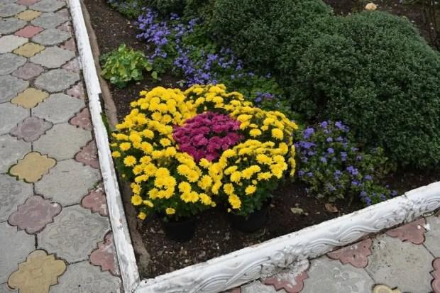 В Детском парке Симферополя высадили хризантемы