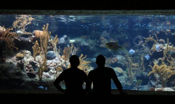 """Морской аквариум - подводный мир на расстоянии вытянутой руки. И релакс, и хобби, и """"изюминка"""" интерьера"""