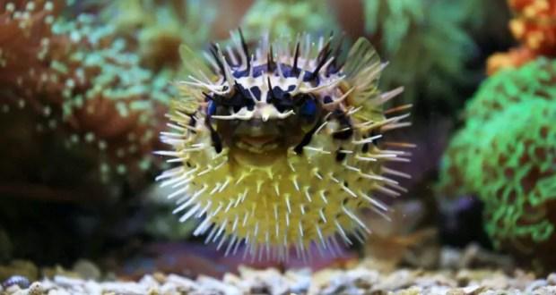 Большие аквариумы – большая ответственность: доверяем обслуживание профессионалам