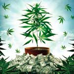 Dokumentation: The Union: The Business Behind Getting High