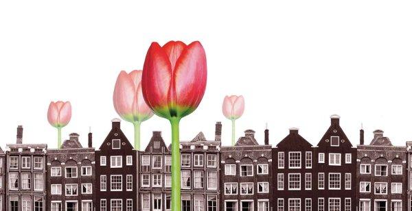 Burbuja de los tulipanes en el siglo XVII