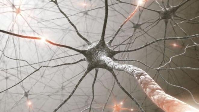 Lazo neuronal - Elon Musk