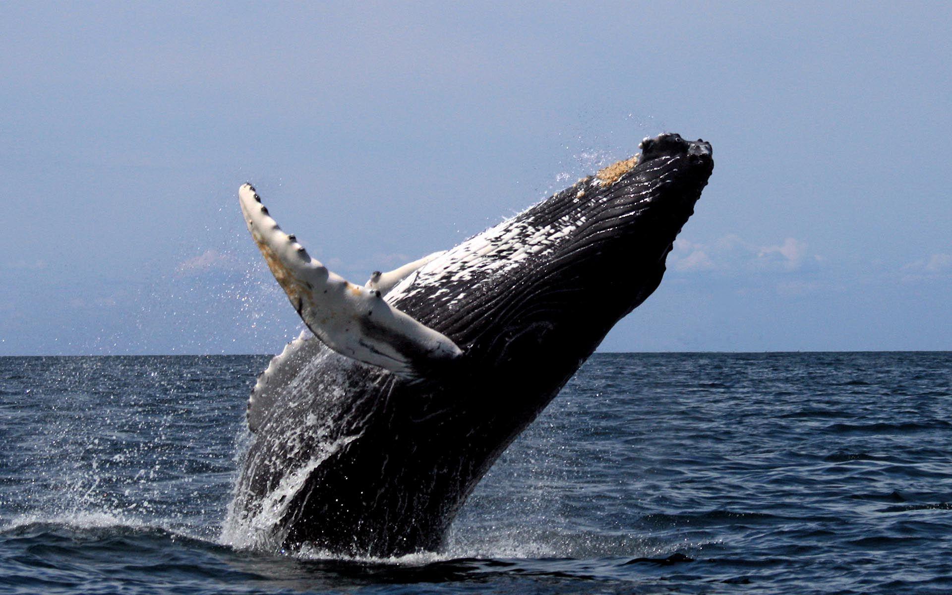 Alerta de ballena: movieron $212 millones (40.000 BTC) por sólo $4