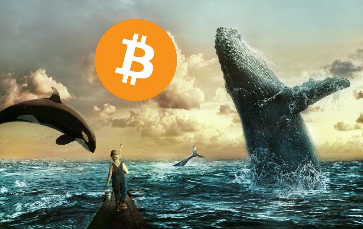 Reporte semanal de la actividad de las ballenas Bitcoin: Movilizan 158.585 BTC