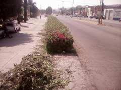 Mantenimiento a jardines del acceso a Nochistlán