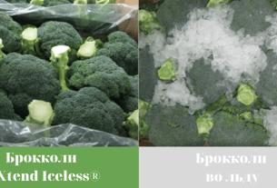 Xtend Iceless,овощи,лёд,свежесть