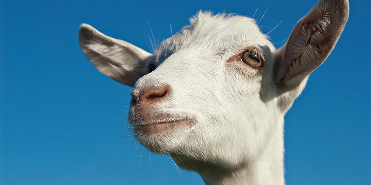 козы,Эфиопия,заложники
