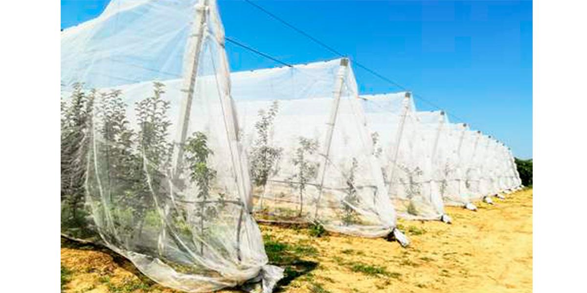 AGRINTECH,сети,насекомые,вредители
