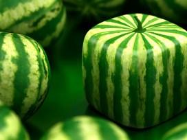 ГМО,Россия,запрет,в мире