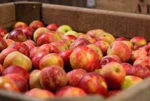 яблоки,Польша,цены,пестициды