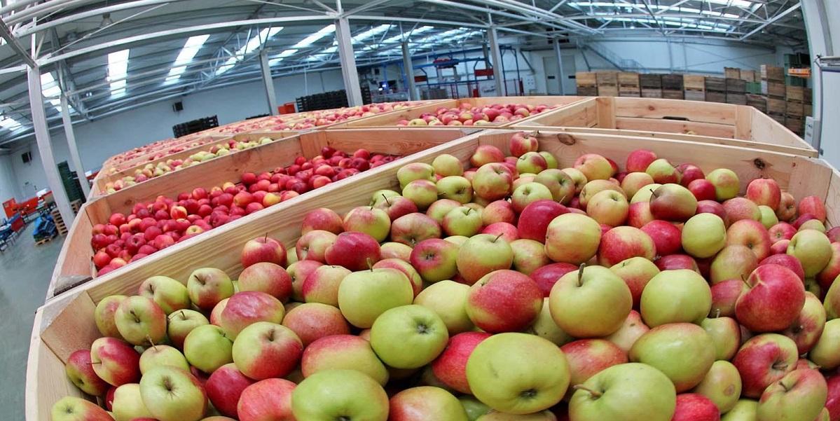 этилен,фрукты,срок годности,платина,яблоки