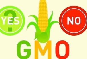 ГМО, безопасность