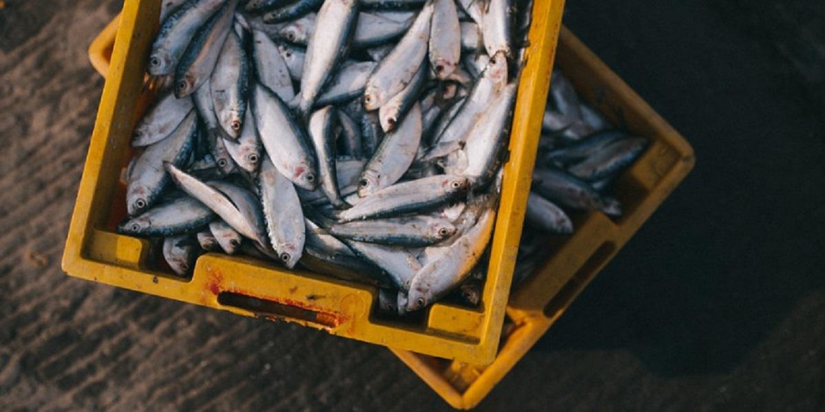 FishToYourDoor, Англия, рыба к дверям