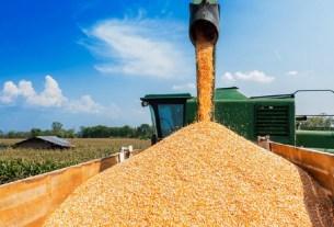 зерно, экспорт, квоты