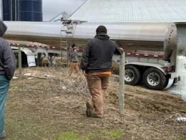 фермеры, США, молоко