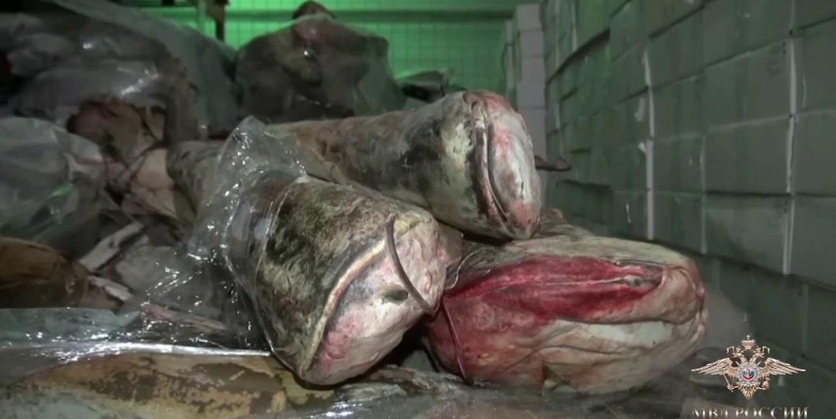 Контрафакт, рыба, сом, икра, осетр, Астраханская область,