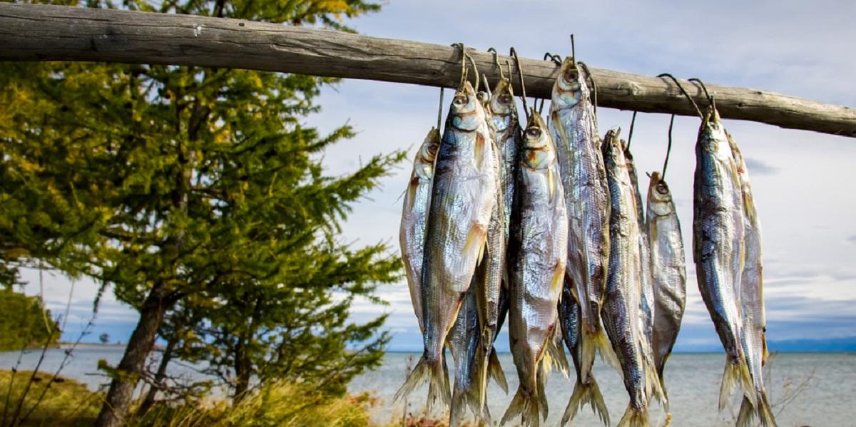 омуль,Иркутск, деликатес, рыба
