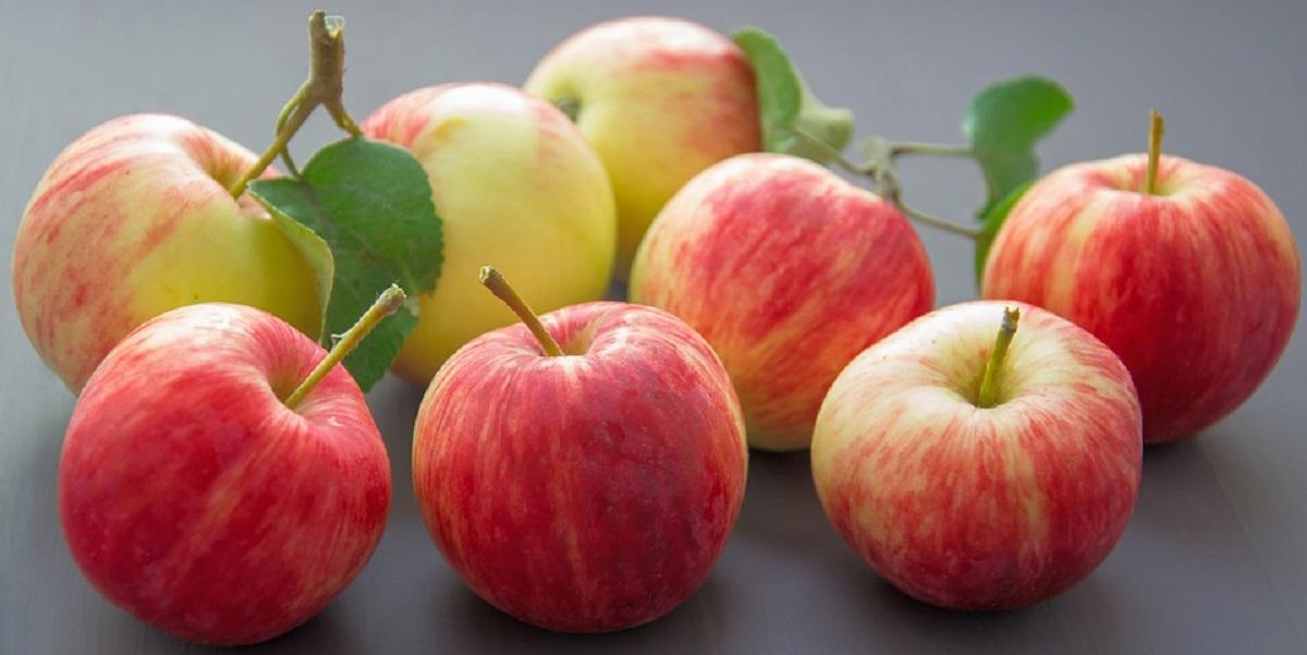 Ассоциация садоводов России, ритейл, реализация, фрукты