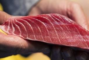 Kura Sushi, тунец, Япония,