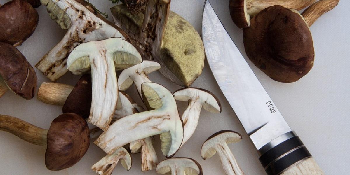 отравление грибами, Роспотребнадзор, млечный сок