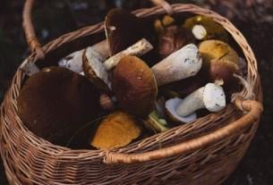 Грибы, собирать грибы, безопасность,