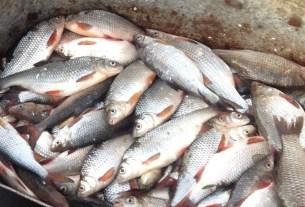 Минсельхоз, ущерб рыбе, водные биоресурсы