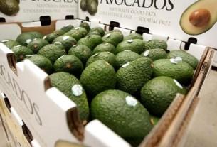 JD Cooling Group, Softripe, авокадо, дозаривание