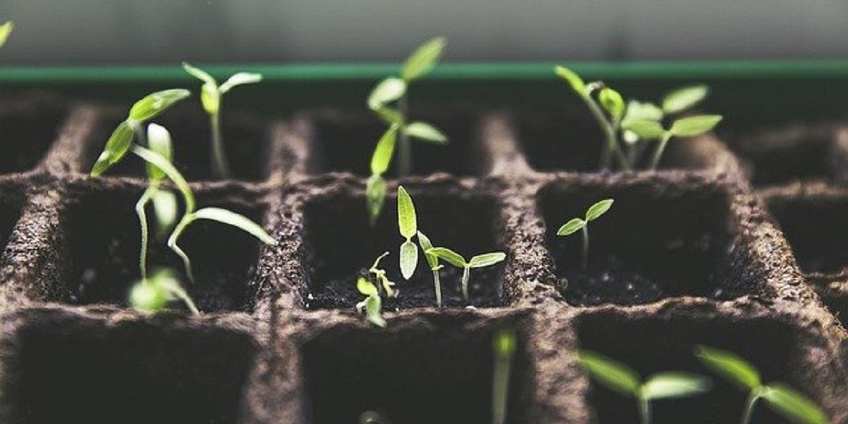 Роялти, Monsanto, Игорь Абакумов, ГМО, Bayer, гибрид,генная инженерия