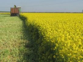 ГМО,рапс, Россельхознадзор, «КиПиАй Агро Сеченово», Нижний Новогород